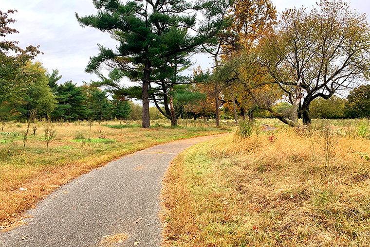 Trail in park surrounded by trees